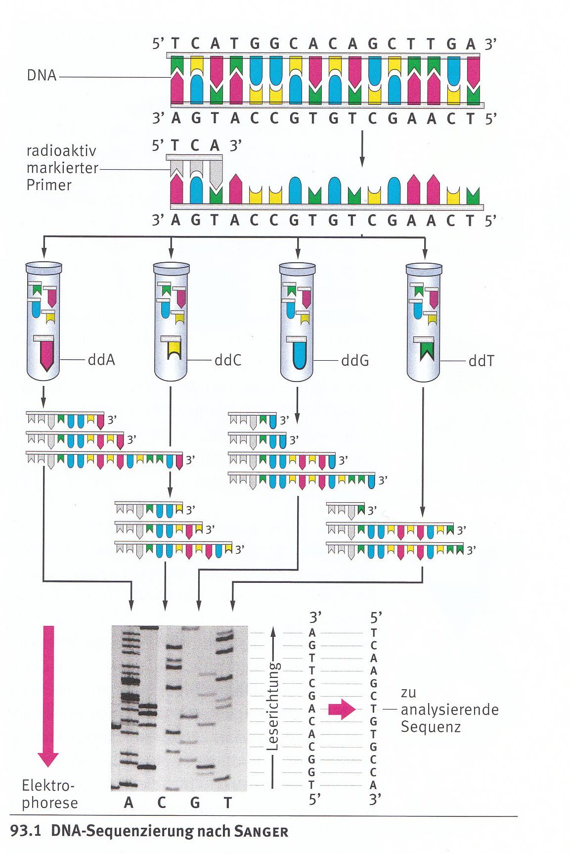 BIOLOGIE_ABITUR_ZUSAMMENFASSUNG.pdf