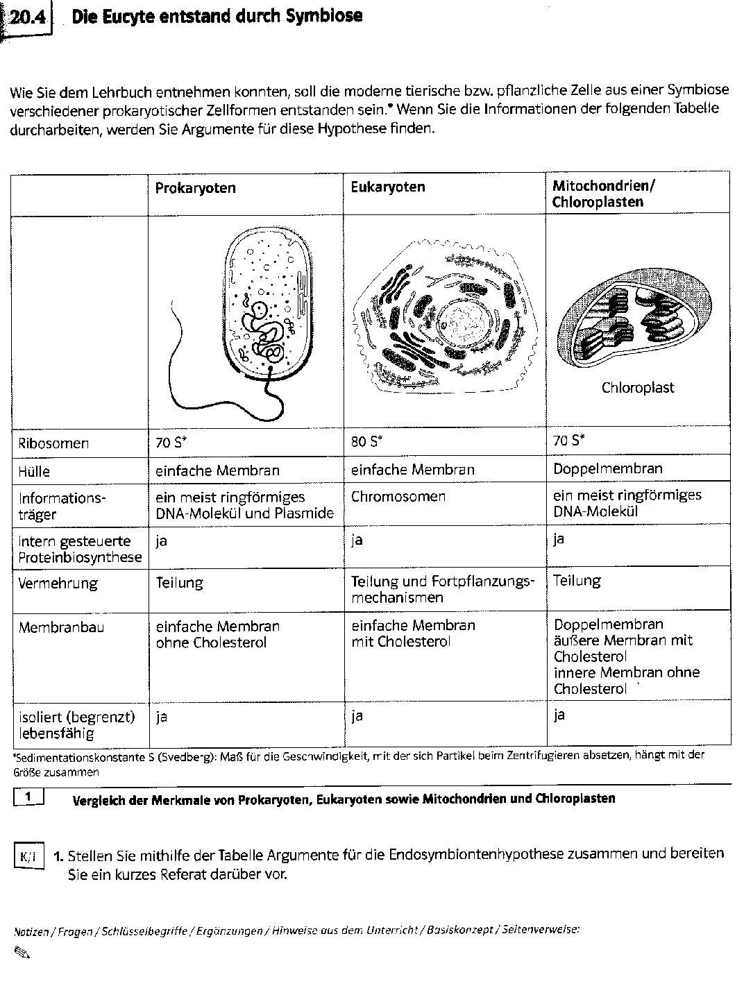 Arbeitsblatt Zelle Oberstufe : Abiunity endosymbiontenhypothese